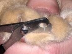 Comment lui couper les griffes - Couper les ongles des chats ...